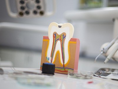 plastic model of tooth